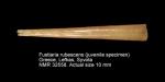 Fustiariidae