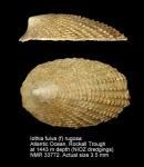 Lepetidae