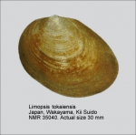 Limopsidae
