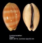 Lyncina leviathan
