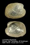 Lyonsiellidae