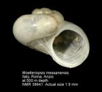 Moelleriopsis messanensis