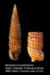 Triphoridae