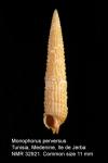 Monophorus perversus