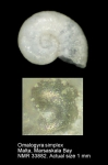 Omalogyridae