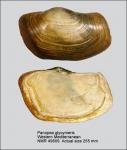 Hiatellidae