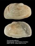 Basterotiidae