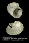 Scissurella lobini