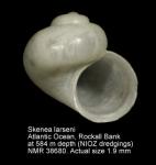 Skeneidae