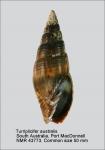 Turriplicifer australis
