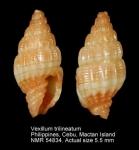 Vexillum trilineatum