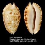 Zoila marginata