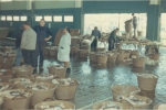 Auction and processing