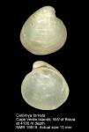 Poromyidae