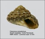 Clanculus consobrinus