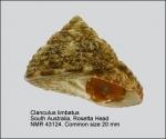 Clanculus limbatus