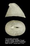 Cranopsis granulata