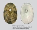 Diodora demartiniorum