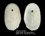 Fissurellidae
