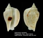 Dolomena variabilis