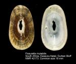 Fissurella mutabilis