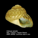Gibbula racketti