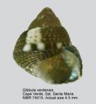Gibbula verdensis