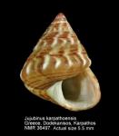 Jujubinus karpathoensis