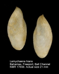 Gastrochaenidae