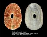 Medusafissurella dubia