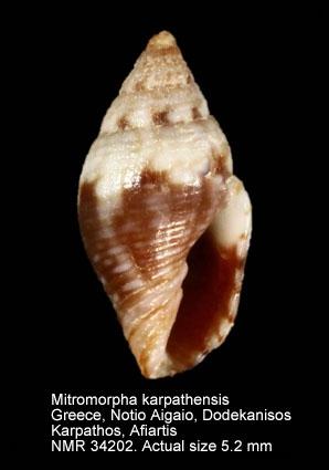 Mitromorpha karpathensis