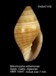 Mitromorpha wilhelminae