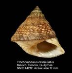 Modulidae