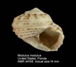 Modulus modulus