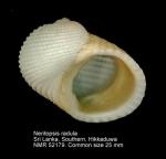 Neritopsidae