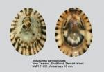 Notoacmea parviconoidea