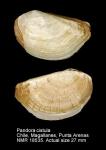 Pandoridae