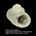 Parviturbo insularis
