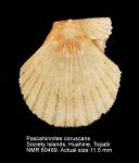 Pascahinnites coruscans