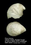 Pilus conicus