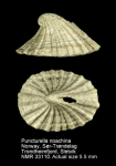 Puncturella noachina