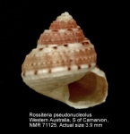 Rossiteria pseudonucleolus