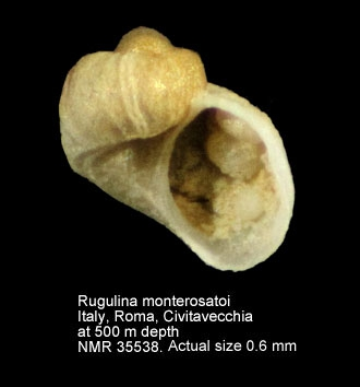 Rugulina monterosatoi