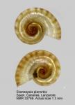 Skeneopsidae