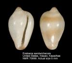 Sulcerato sandwichensis