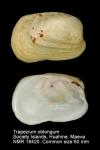Trapezidae