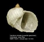 Vanikoridae