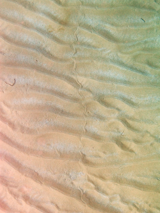 Apterichtus caecus: footsteps in the sand bottom