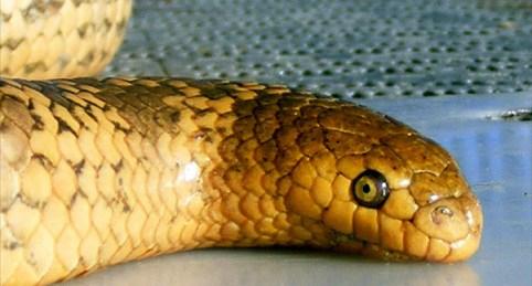 Mosaic Sea Serpent