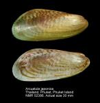 Arcuatula japonica